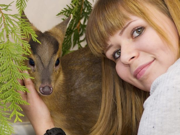 Orphaned Baby Deer Moves Into Animal Lover's Spare Room For Christmas