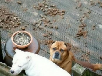 Man Fined Over £1k For Dog Mess Mountain On His Patio