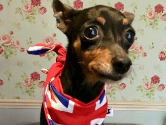 Huge £11,000 Reward Offered For Safe Return Of Beloved Pet Dog - 'Stolen' From Home As Owners Watched TV