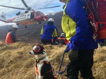Mountain Rescue Team Dog Wears Safety Glasses During Helicopter Rides