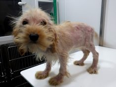 """RSPCA Appeal For Information After Three Puppies Were Dumped And Found In """"Terrible State"""""""