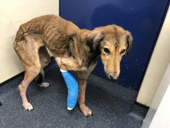 Dog Rescued After It Was Caught On CCTV Wandering Onto Garage Forecourt Starving And Injured