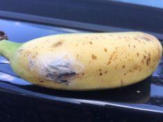 Shocked Mum Nearly Feeds Banana FULL Of Spider Eggs To Her Baby