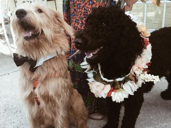 Two Pooches Tie The Knot In Adorable Dog Wedding