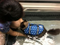 Chubby Cat Takes To An Underwater Treadmill In A Last-Ditch Effort To Shed The Pounds