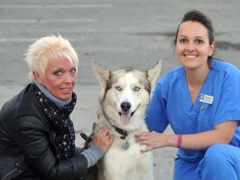 Hungry Hound Lucky To Be Alive After Swallowing An Eight-Inch KEBAB SKEWER