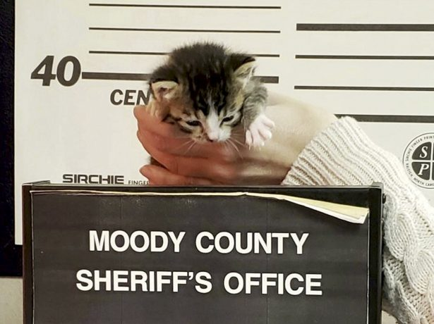 Meet Felony, The Criminally Cute Abandoned Kitty Who Posed For Her Own Mugshot