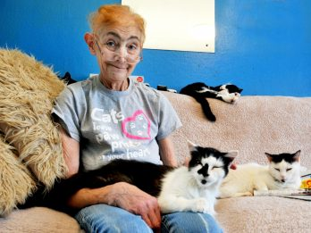 Woman In Race Against Time To Find Homes For 40 Cats - After Being Diagnosed With Terminal Cancer