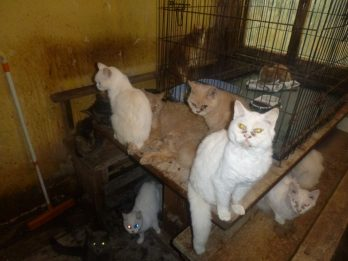 Elderly Couple Banned From Keeping Pets For Life After Being Convicted Of Cruelty To Their 73 Cats