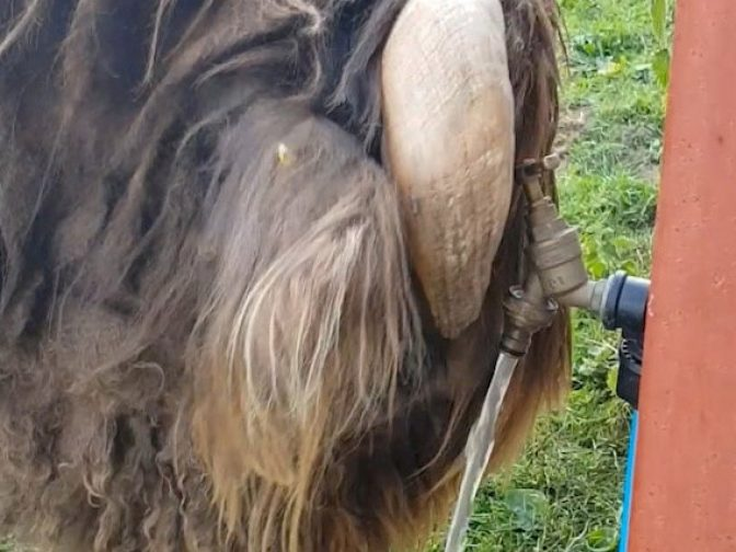 Moment Clever Bullock Managed To Find A Way To Cool Down – By Turning A Tap On