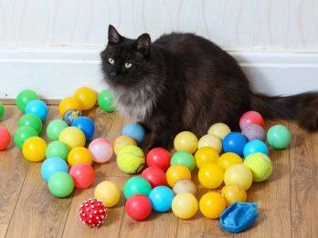 Cheeky Cat Keeps Stealing Dozens Of Children's Ball-Pit Balls