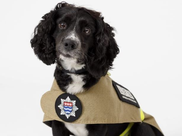 New Uniform For London Firefighters - And Their DOGS