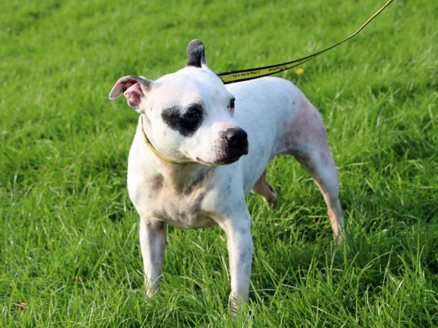 Rescued Dog With Love-Shaped Markings Needs A Home