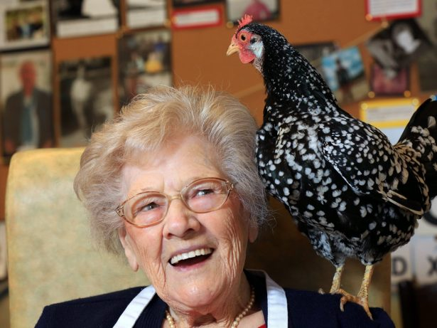 Dementia Sufferers Have Their Days Brightened Up By Group Of Therapy Hens