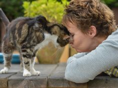 17-Year-Old Moggy Finally Home After 13 Years As A Stray