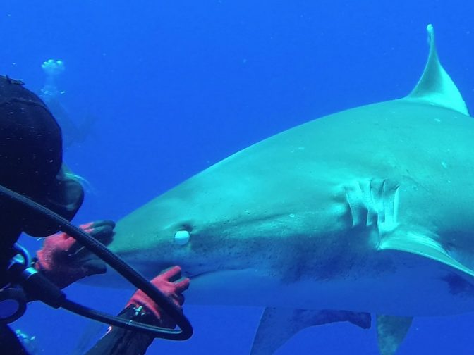 Brave Diver Pulls Hook Out Of Shark's Mouth In Amazing Slow-Motion Video