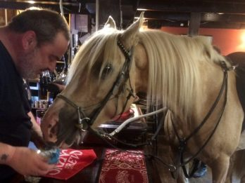 Horse Walks Into A Bar - And Tucks Into A Packet Of Crisps