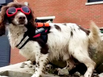 Adorable Scottish Fire Dog With His Own Special Uniform Set To Become Viral Star With Very Own Twitter Account