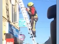 Firefighters Rescue Pet Iguana After It Got Trapped On A Roof SUNBATHING