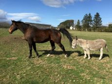 Best Friends! – Inseparable Horse And Donkey Rehomed Together