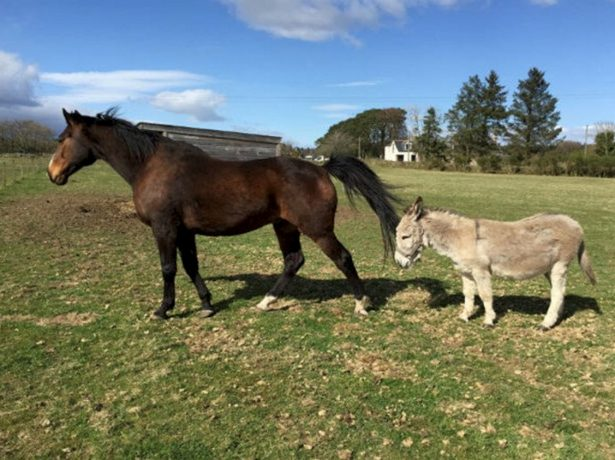 Best Friends! - Inseparable Horse And Donkey Rehomed Together