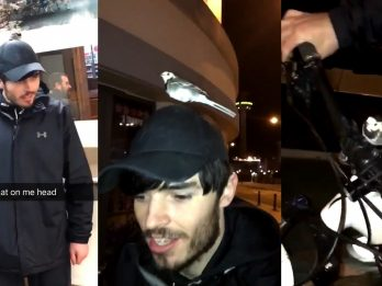 Hilarious Video Show Night Out With A Difference After Bird Joins Man On His Adventure
