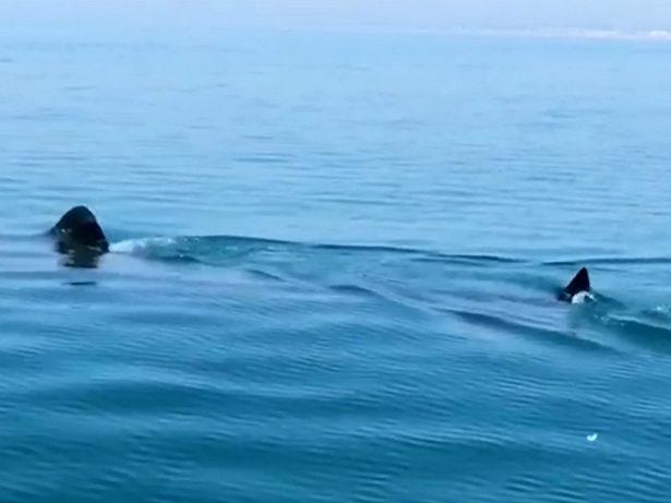 Huge 25ft Basking Shark Caught On Camera Off British Coast