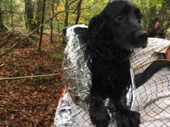 Lucky Dog Rescued After Falling 100ft Down Mineshaft