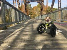 Disabled Dog Who Was Rescued From Horror Hoarding Situation Is Living Life To The Fullest With New Wheelchair