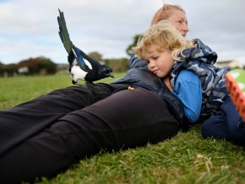 Tame Hand-Reared Magpie Becomes A Hit By Be-Friending Locals At Park