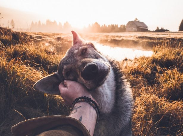Instagrammer Captures Beautiful Images Petting His Dog In The Most Gorgeous Settings