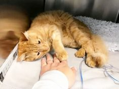 French Cat Found In London Following A Near-Fatal Hit And Run