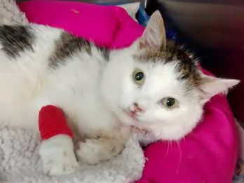 Cat Had Miracle Escape After Plummeting 100ft From Block Of Flats