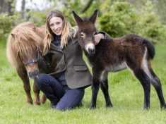 Meet The World's First Mini-Mule – A Donkey Crossed With A Miniature Shetland Pony