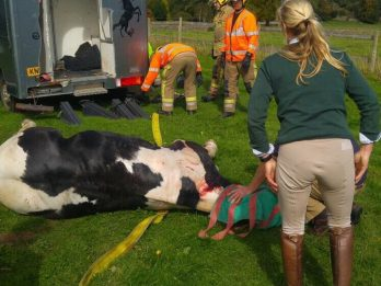 Horse Rescued By Firefighters After Getting Stuck Upside Down In Its Horsebox