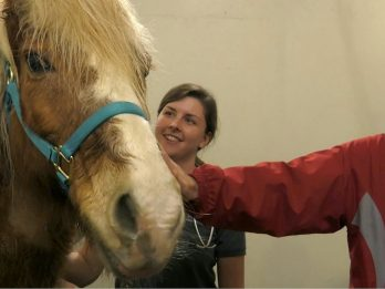 Sick Pony Diagnosed With Leukemia Given A Chance At Life Thanks To Human Treatment