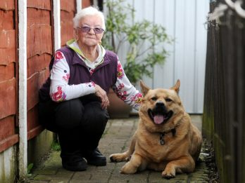 Dog Tackles And Bites Burglar To Protect 86-Year-Old Owner