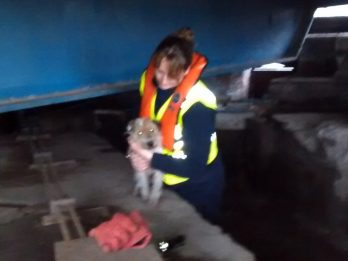 Terrier Discovered Just Hours From Death Cowering In A Deep Pit Under Bridge After Falling In