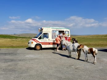 Wild Ponies Appeared To Be Queuing For Ice Cream During The Heatwave On Dartmoor
