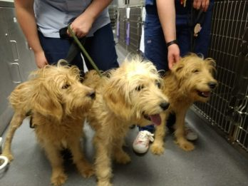 Three Adorable Puppies Abandoned Hours Before Christmas