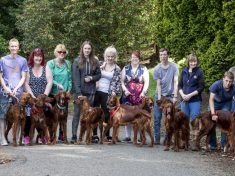 Adorable Batch Of 15 Puppies Have Been Reunited With Their Mum For The First Time In A Year