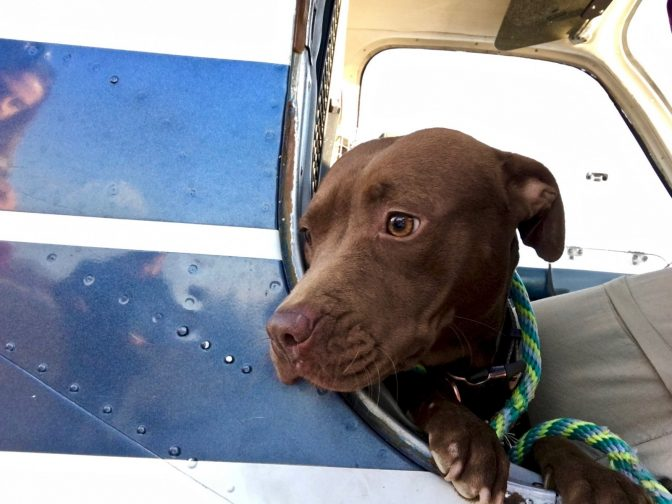 Hero Pilot Takes Off From Burning Airport With A Plane Full Of Puppies