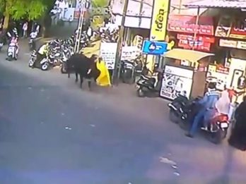 Woman Was Out Shopping On Busy Street When She Was Charged By A BULL