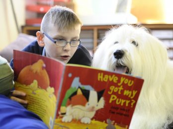 Primary School Introduces Reading Dogs Which Sit And Listen When Children Read To Them
