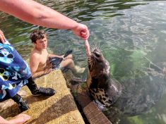 Hilarious Moment Snorkeler Is Joined At Harbourside – By A SEAL