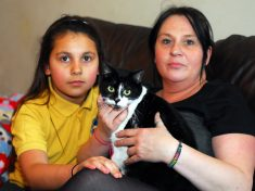 Pet Owners Fear The Return Of Mystery Cat Shaver Who Left 12 Felines Clippered
