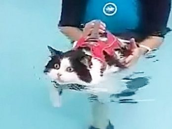 Sink Or Swim For 10kg 'Fat Cat' In Mission To Lose Weight