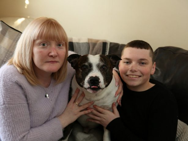 Family Pet In The Doghouse After Letting Thief Steal Gifts While He Slept On The Sofa