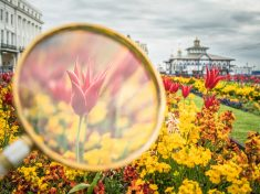 Photographer Uses Magnifying Glass To Capture Flowers In Their Finest Form