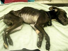 Starving Dog Found Dumped Under A Bush
